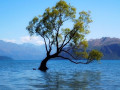 20-Tree-Lake-Julian-C