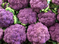 4-Purple-Cauliflower-Cleland