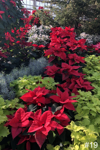 19-Garfield-Park-Conservatory-at-Christmas