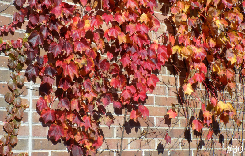 30-Library-Wall-Ivy
