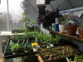 Plant-Sale-Seedlings
